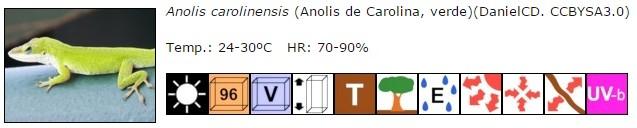 Anolis carolinensis, ficha