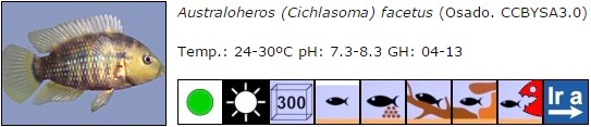 Australoheros (Cichlasoma) facetus
