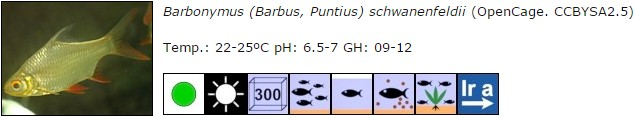 Barbonymus (Barbus, Puntius) schwanenfeldii