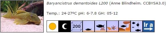 Baryancistrus demantoides L200