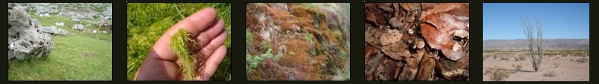 Biotopos anfibios terrestres