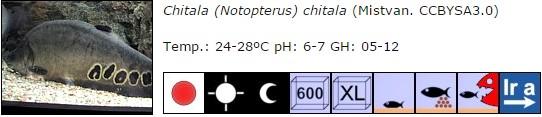 Chitala (Notopterus) chitala