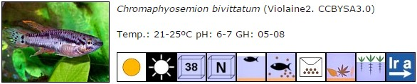 Chromaphyosemion bivittatum