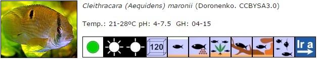 Cleithracara (Aequidens) maronii