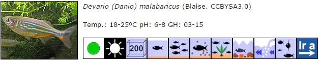 Devario (Danio) malabaricus