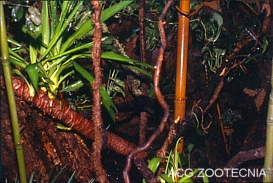 Terrario selva tropical