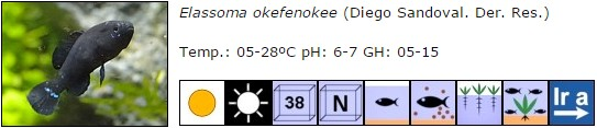 Elassoma okefenokee