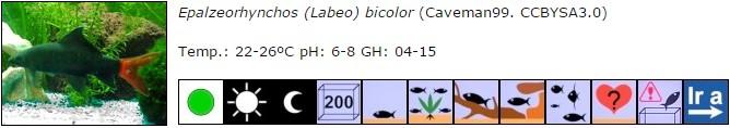 Epalzeorhynchos (Labeo) bicolor