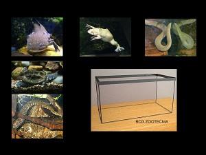 Exclusivamente acuaticos acuario