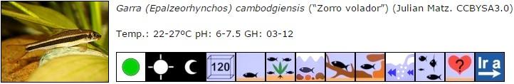 Garra (Epalzeorhynchos) cambodgiensis