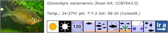 Glossolepis wanamensis