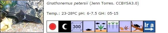 Gnathonemus petersii