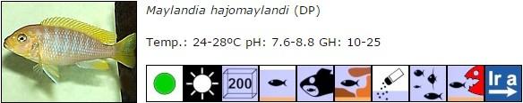 Maylandia hajomaylandi