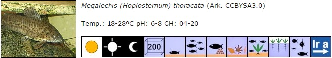Megalechis (Hoplosternum) thoracata