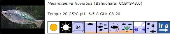 Melanotaenia fluviatilis