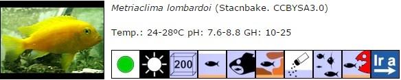 Metriaclima lombardoi