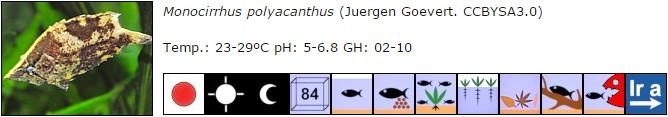 Monocirrhus polyacanthus