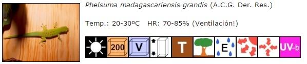 Phelsuma madagascariensis ficha