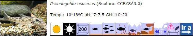Pseudogobio esocinus