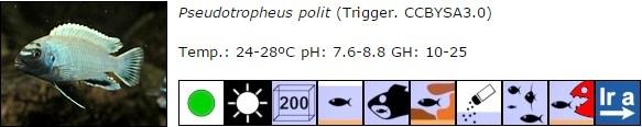 Pseudotropheus polit