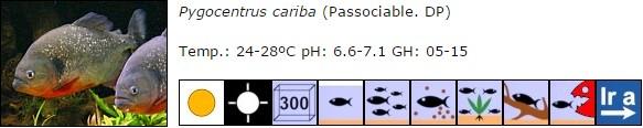 Pygocentrus cariba