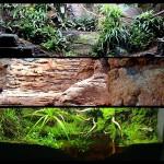 Reproduccion biotopos terrario