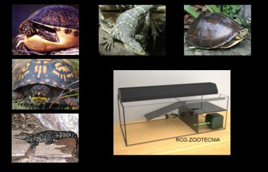 Reptiles vida anfibia 02