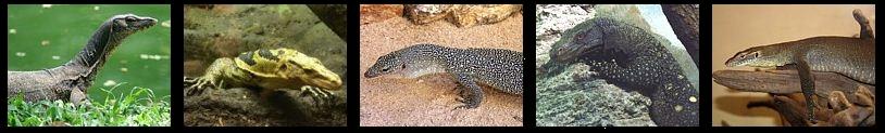 Reptiles vida anfibia