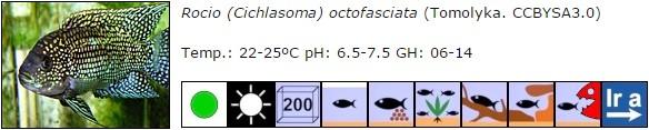 Rocio (Cichlasoma) octofasciata