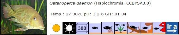 Satanoperca daemon