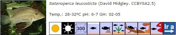 Satanoperca leucosticta