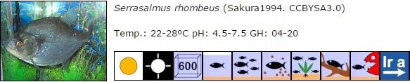 Serrasalmus rhombeus
