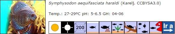Symphysodon aequifasciata haraldi