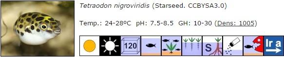 Tetraodon nigroviridis