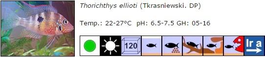 Thorichthys ellioti