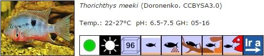 Thorichthys meeki