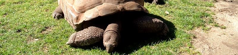 Tortuga de Aldabra