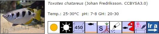 Toxotes chatareus