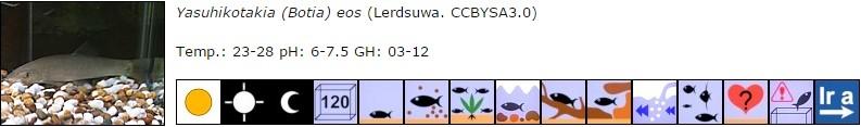 Yasuhikotakia (Botia) eos