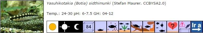Yasuhikotakia (Botia) sidthimunki