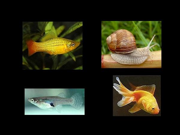alimentacion peces moluscos