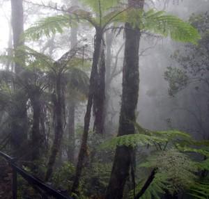 Selva nubosa, Borneo