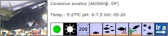 carassius auratus 01