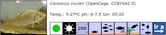 carassius cuvieri