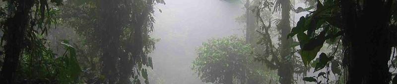 Selva nebulosa. Costa rica. DirkvdM. CCBYSA1.0