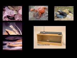 reptiles terrestres 02