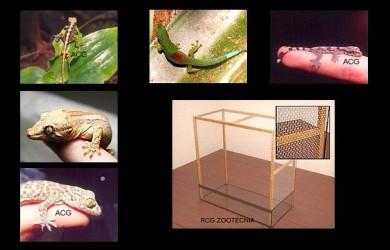 reptiles terrestres humedos 02