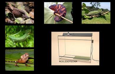 reptiles terrestres humedos 03