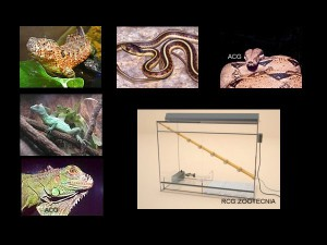 reptiles vifa anfibia 01