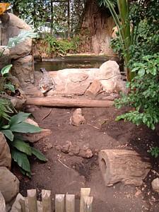 Terrario para cocodrílidos